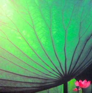 Pang Datong - Lotus leaf + flower