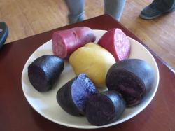 Three varieties of potatoes (Shandan co-operative)