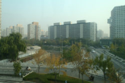 Trees among the high-rises in Beijing