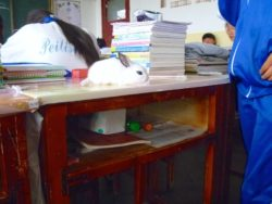 Rabbit living in a school desk (at Shandan Bailie School)!
