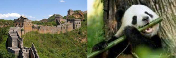 Great Wall + Panda