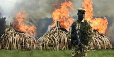 Great News – China to ban Ivory Trade!