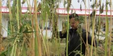 Challenges of Promoting Hemp grown in Shandan as a Building Material